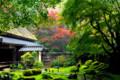 京都新聞写真コンテスト 秋雨に光彩