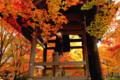 京都新聞写真コンテスト 定刻の鐘