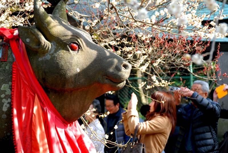 京都新聞写真コンテスト 赤目和牛