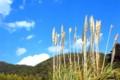 京都新聞写真コンテスト 春色の空