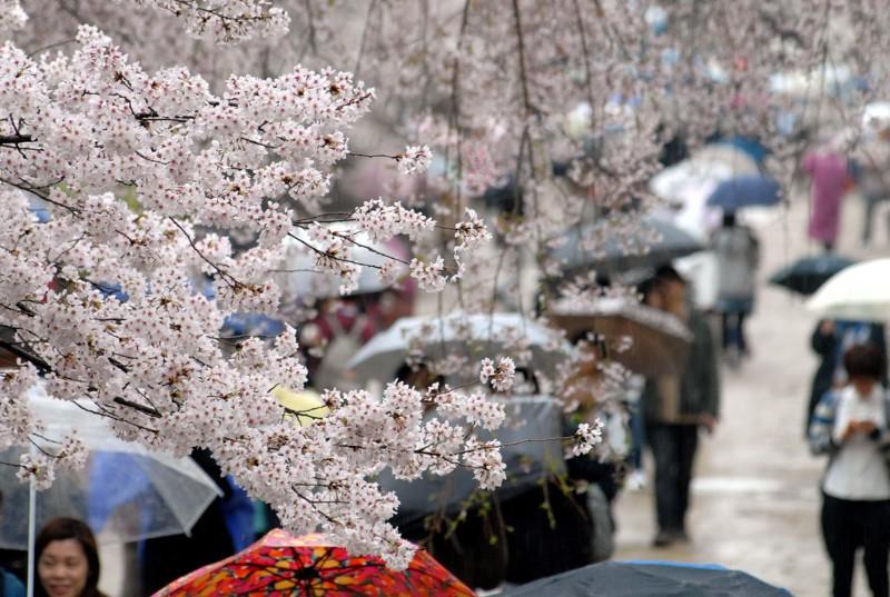 京都新聞写真コンテスト 悲しき雨音