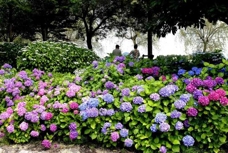 京都新聞写真コンテスト味歳の丘