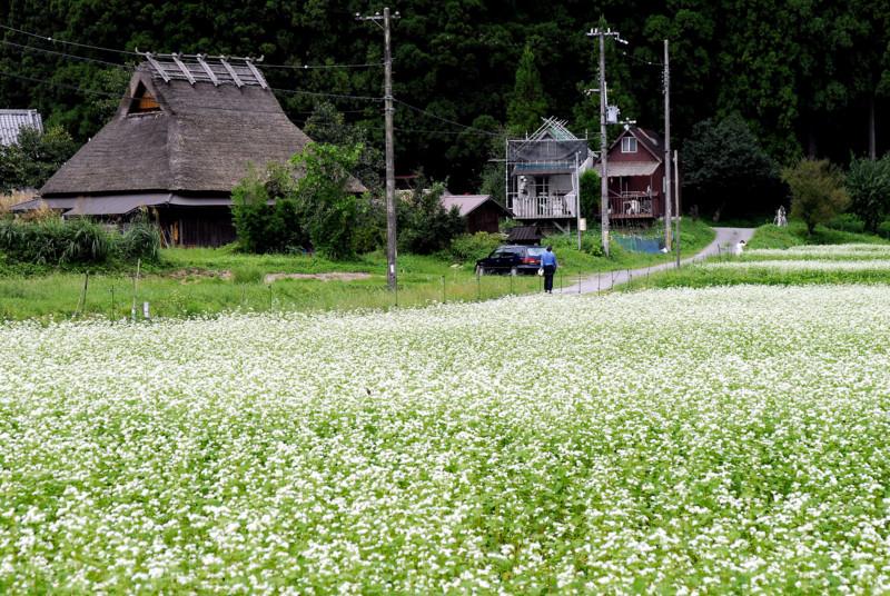 京都新聞写真コンテスト 美山初秋