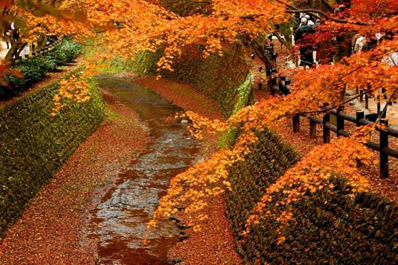 京都新聞写真コンテスト 赤い河