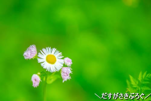 f:id:jyokigen22ra:20190502235520j:plain