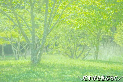 f:id:jyokigen22ra:20190510224351j:plain