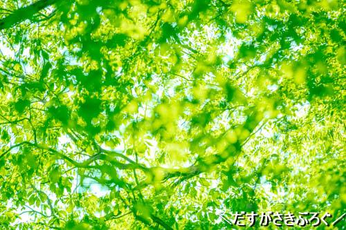 f:id:jyokigen22ra:20190523192254j:plain