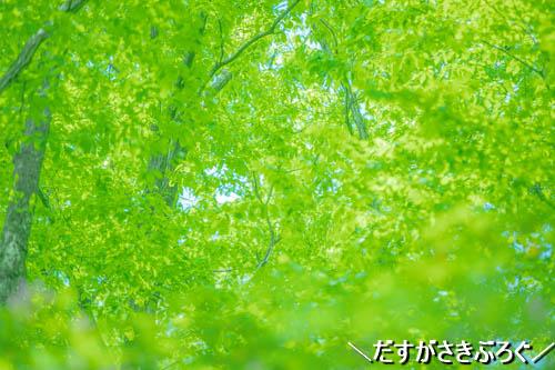 f:id:jyokigen22ra:20190529223511j:plain