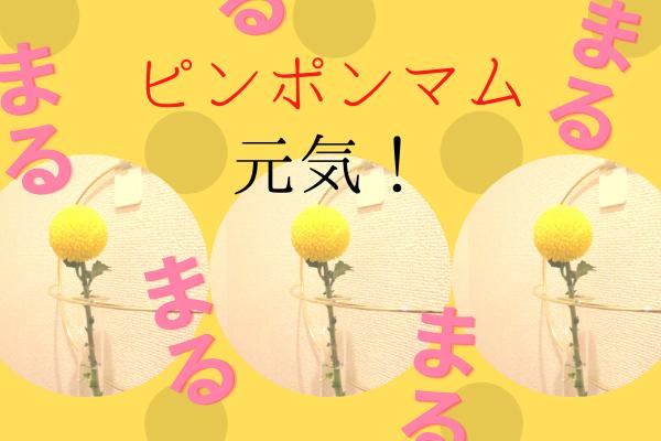 f:id:jyokigen22ra:20201015155356p:plain
