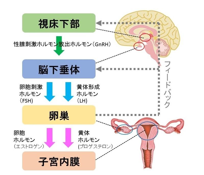 f:id:jyoseinoomamori:20190808172314j:plain