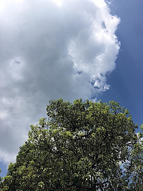 f:id:jyurakusha:20170821162409j:plain