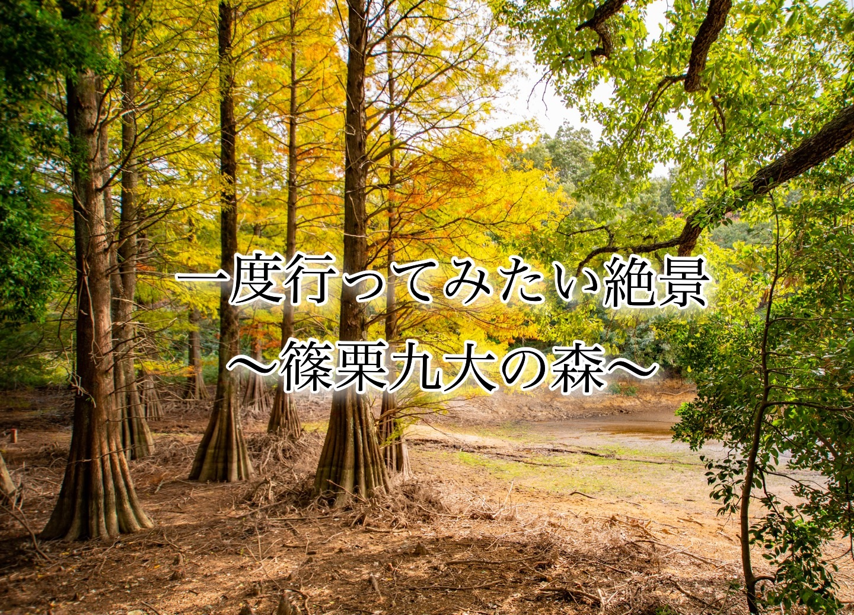 f:id:k-akoi1019:20181217153946j:image