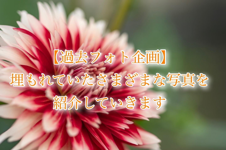 f:id:k-akoi1019:20190116010840j:plain
