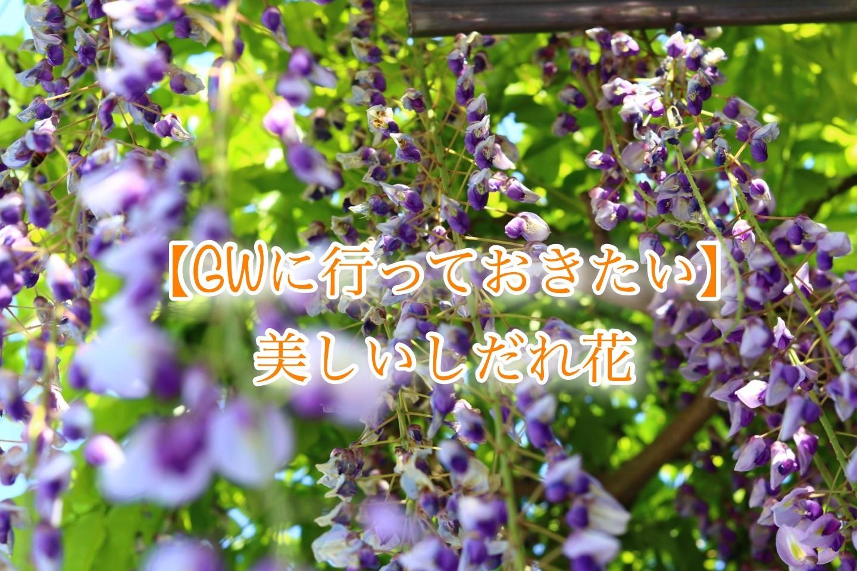 f:id:k-akoi1019:20190427230101j:image