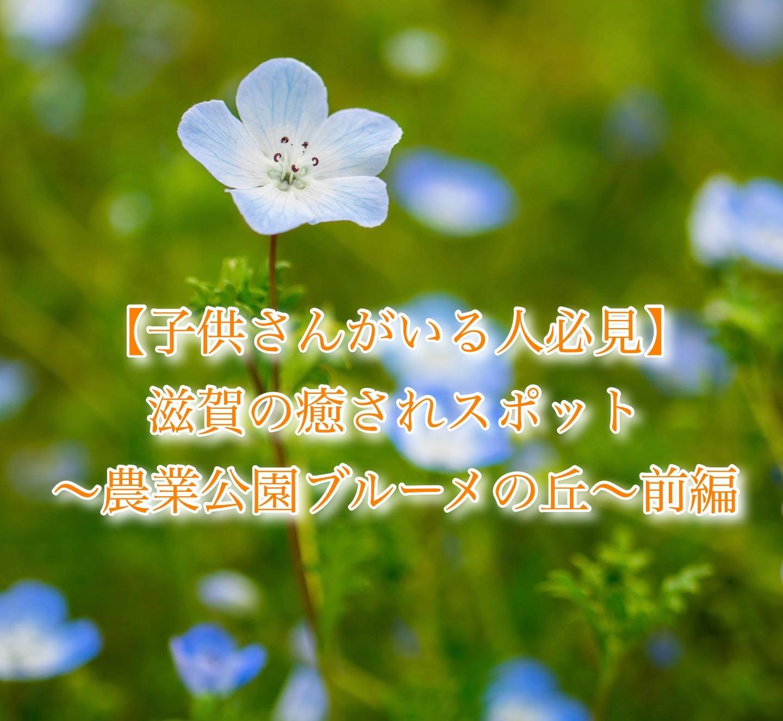 f:id:k-akoi1019:20190607224006j:image