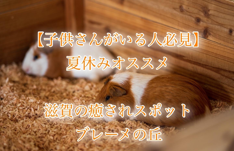 f:id:k-akoi1019:20190722192914j:image