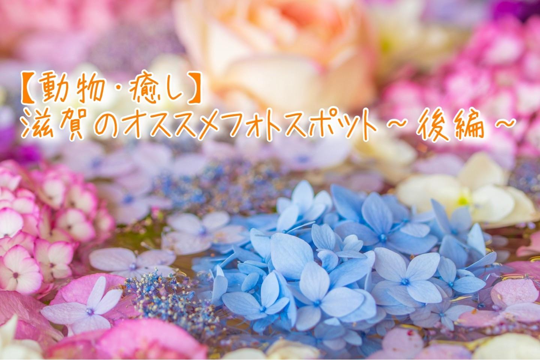 f:id:k-akoi1019:20190902174515j:image