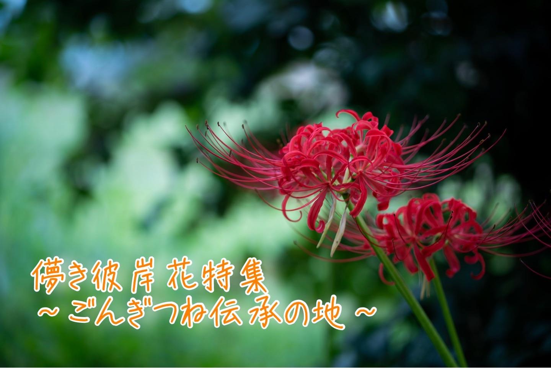 f:id:k-akoi1019:20190930151412j:image