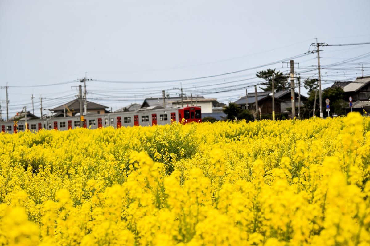 電車で景色を楽しむ