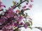 写真素材 桜 サクラ 春 花 自然 フリー素材