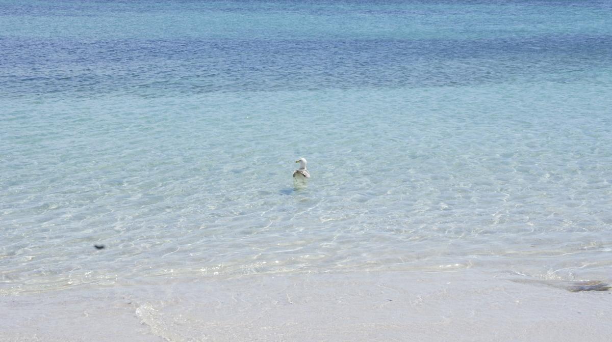 スペイン オンス島