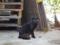 林崎漁港の黒猫