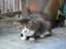 互福庵前で出会った猫
