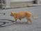 明石港の猫明石港の猫
