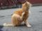 明石港の猫