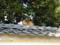 上月で出会った猫