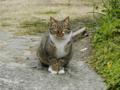 尼崎大物の猫