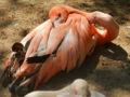 王子動物園 フラミンゴ