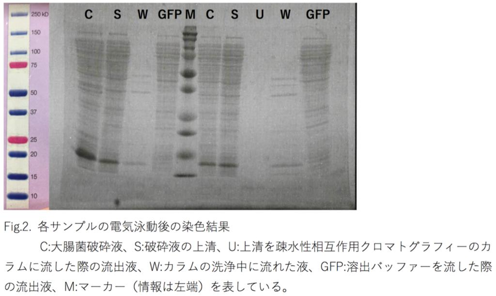 f:id:k-ishikawa-science:20180203134801p:plain