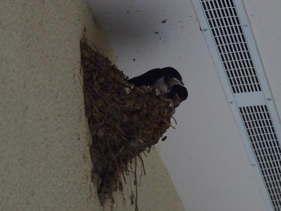 f:id:k-j-kuwata:20110613164513j:image:w640