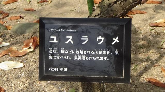 f:id:k-mutumi:20180330005807j:plain