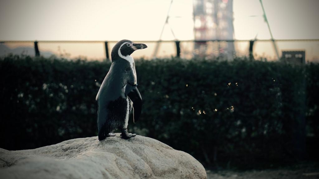 f:id:k-penguin:20161203210646j:plain