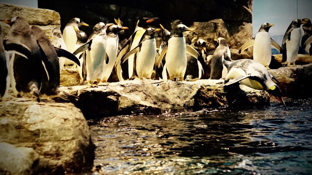 f:id:k-penguin:20161203212219j:plain