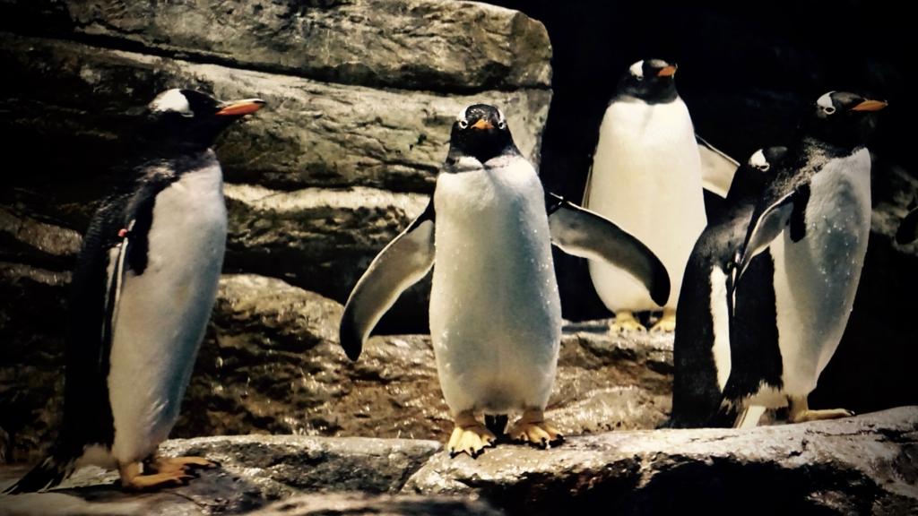 f:id:k-penguin:20161203212234j:plain