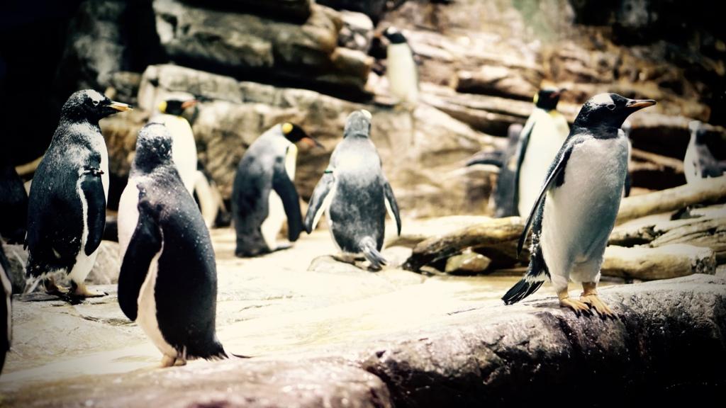 f:id:k-penguin:20161203212252j:plain