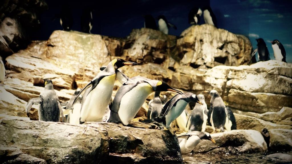 f:id:k-penguin:20161203212258j:plain