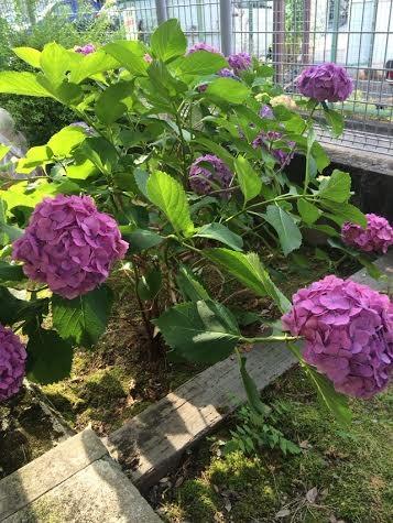 f:id:k-rose:20160615163300j:plain