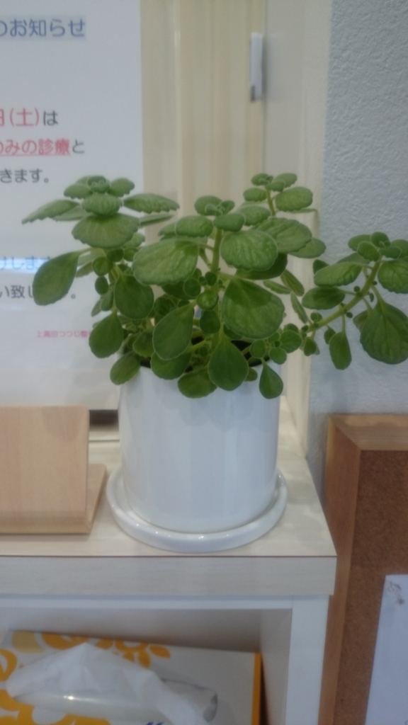 f:id:k-tsutsuji:20170118093548j:plain