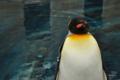 [鳥][ペンギン]