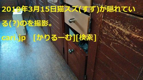 f:id:k130123:20190404141945j:plain