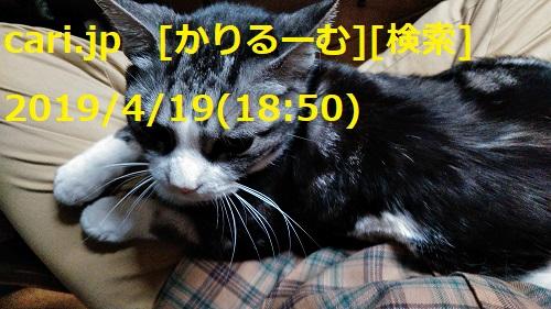 f:id:k130123:20190502155151j:plain