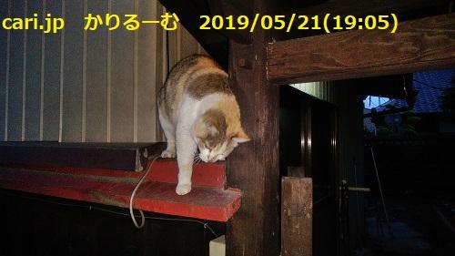 f:id:k130123:20190606100112j:plain
