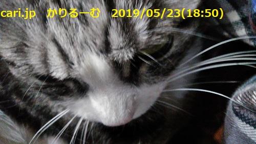 f:id:k130123:20190608170224j:plain
