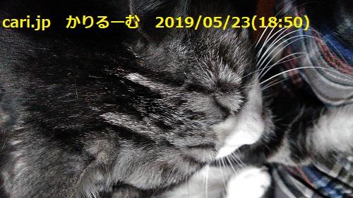 f:id:k130123:20190630140046j:plain