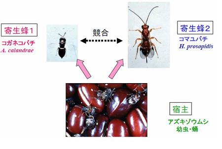 f:id:k16:20080206212849j:image:left