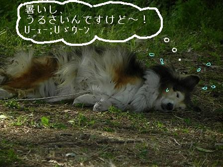 f:id:k9352009:20110525100930j:image
